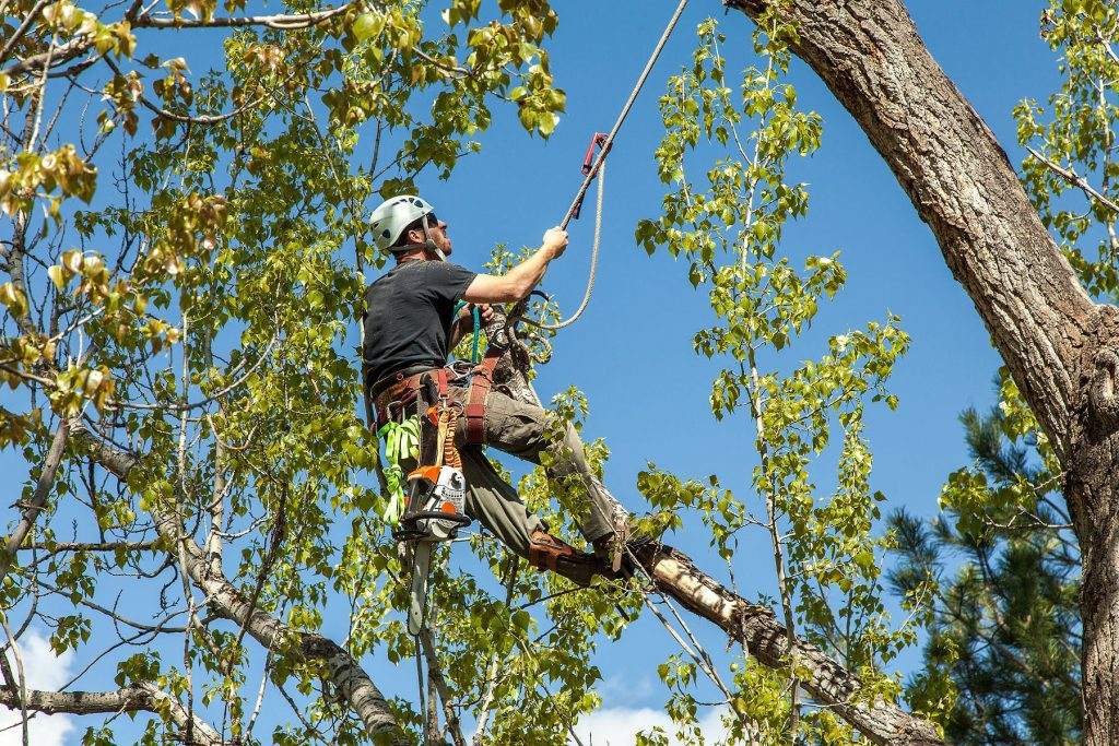 Certified arborist in Riverside, Ca